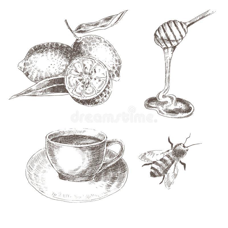 Διανυσματικό συρμένο χέρι λεμόνι, κουτάλι μελιού, φλυτζάνι καφέ, μέλισσα σκίτσο που σύρει την υγιή συλλογή τροφίμων ελεύθερη απεικόνιση δικαιώματος