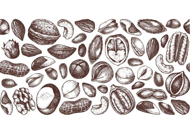 Διανυσματικό σχέδιο καρυδιών Συρμένο χέρι πεκάν, macadamia, καρύδια πεύκων, ξύλο καρυδιάς, αμύγδαλο, φυστίκι, κάστανο, φυστίκι, κ απεικόνιση αποθεμάτων