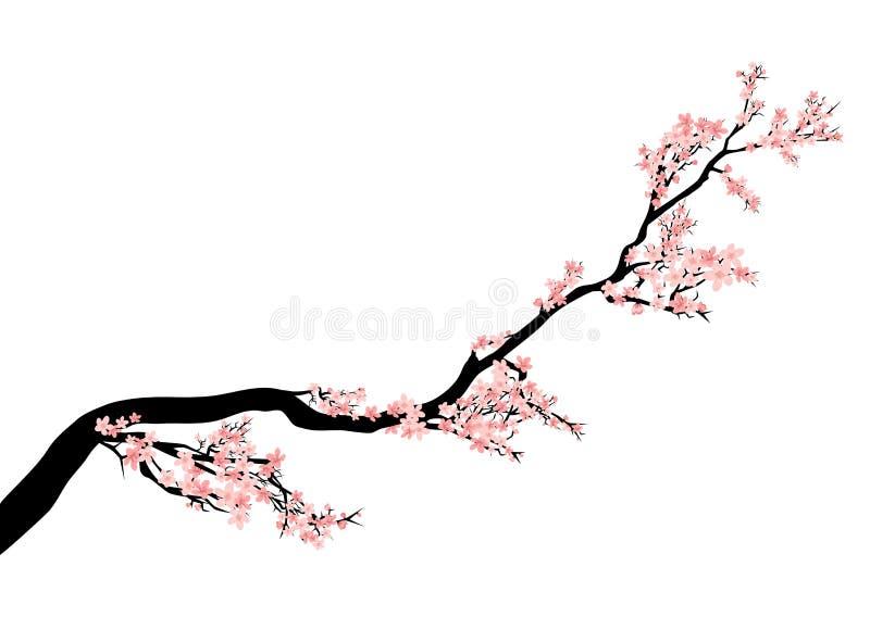 Διανυσματικό σχέδιο κλάδων ανθών δέντρων Sakura απεικόνιση αποθεμάτων