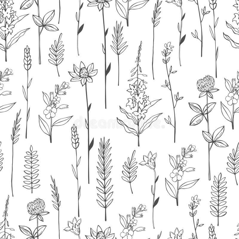 Διανυσματικό σχέδιο με τα άγρια χορτάρια και τα λουλούδια απεικόνιση αποθεμάτων
