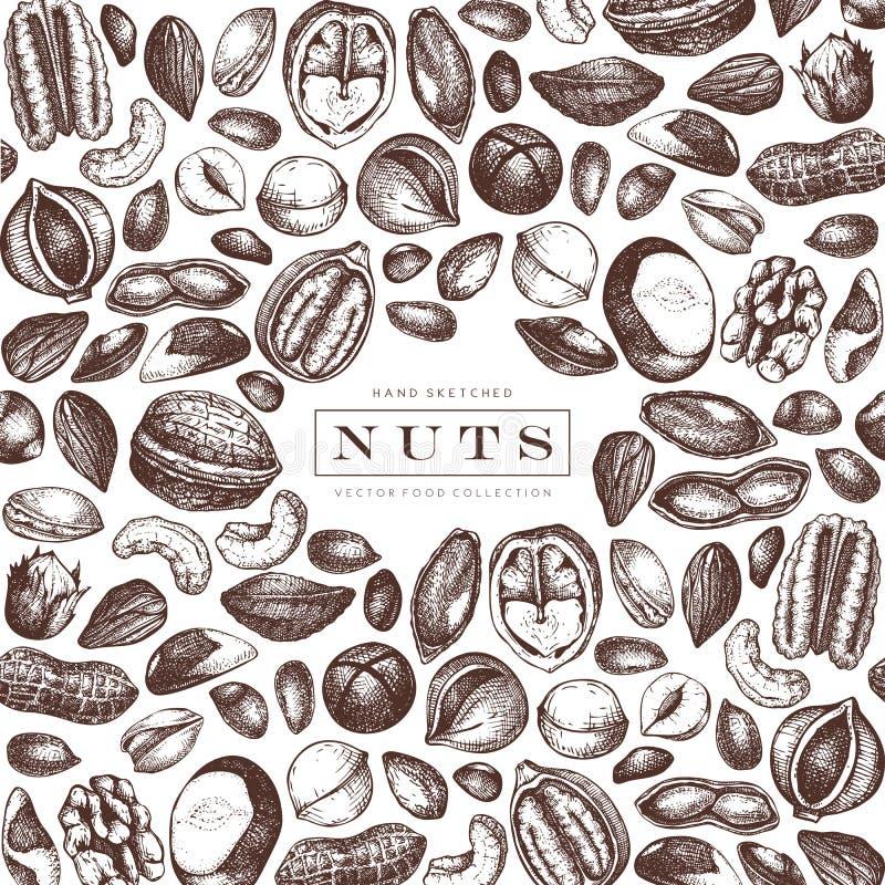 Διανυσματικό σχέδιο πλαισίων καρυδιών Συρμένο χέρι πεκάν, macadamia, καρύδια πεύκων, ξύλο καρυδιάς, αμύγδαλο, φυστίκι, κάστανο, φ απεικόνιση αποθεμάτων