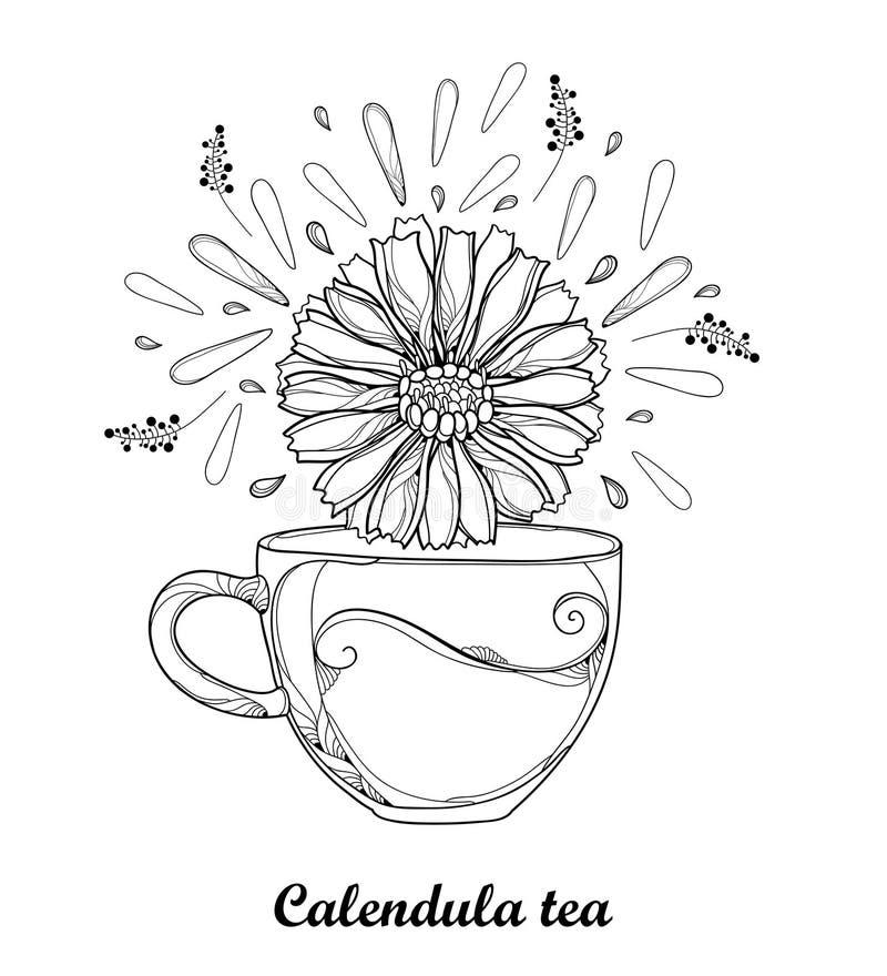 Διανυσματικό σχέδιο του φλυτζανιού περιγράμματος του βοτανικού τσαγιού officinalis Calendula με τα πέταλα και του λουλουδιού στο  διανυσματική απεικόνιση