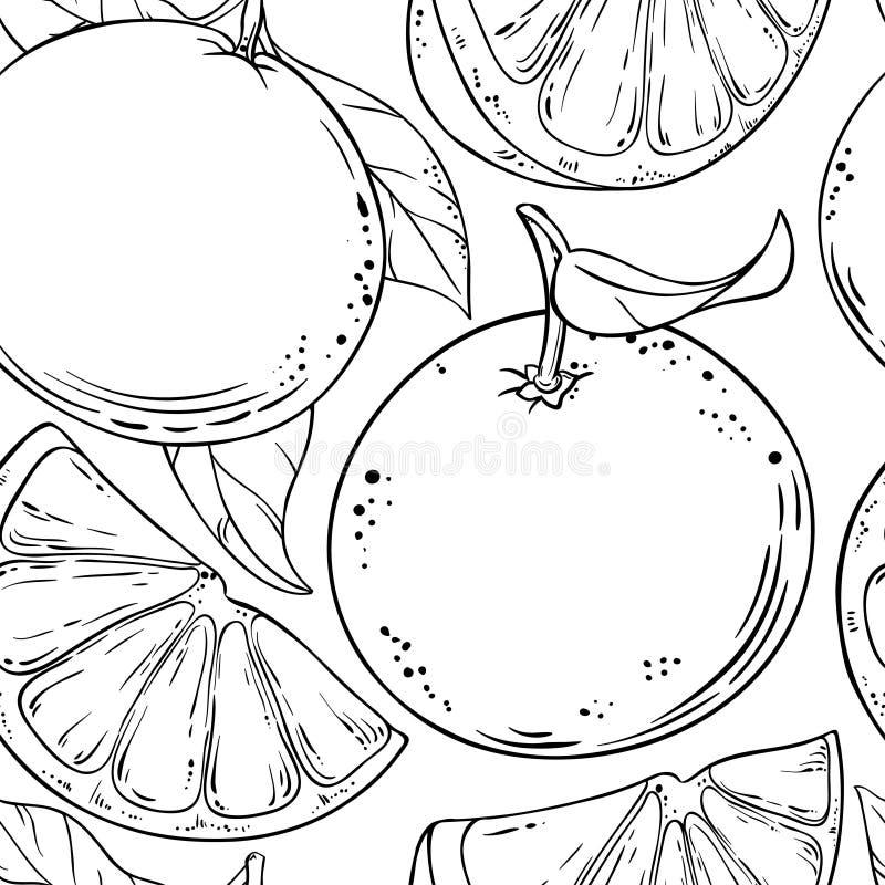 Διανυσματικό σχέδιο φρούτων γκρέιπφρουτ ελεύθερη απεικόνιση δικαιώματος