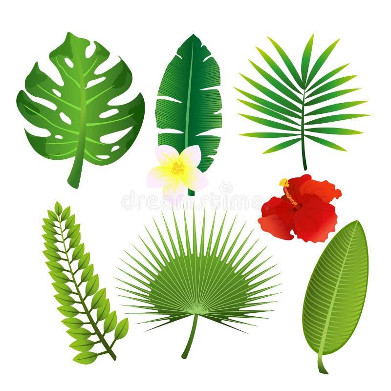 Διανυσματικό σύνολο απεικόνισης εξωτικών τροπικών φύλλων και λουλουδιών Ζωηρόχρωμη floral συλλογή στο επίπεδο ύφος κινούμενων σχε διανυσματική απεικόνιση