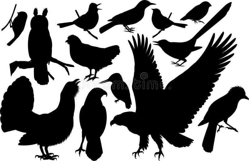 Διανυσματικό σύνολο δασόβιων σκιαγραφιών πουλιών διανυσματική απεικόνιση