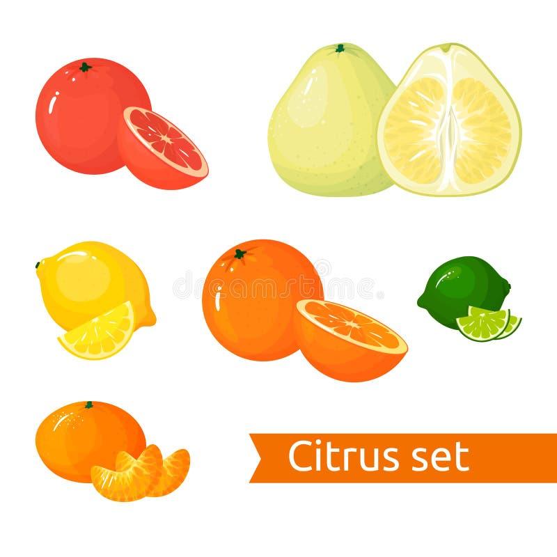 Διανυσματικό σύνολο εσπεριδοειδών κινούμενων σχεδίων Απομονωμένα εικονίδια φρούτα ελεύθερη απεικόνιση δικαιώματος