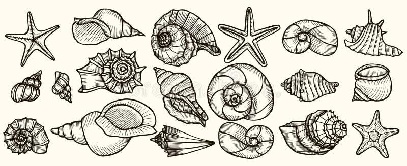 Διανυσματικό σύνολο θαλασσινών κοχυλιών διανυσματική απεικόνιση