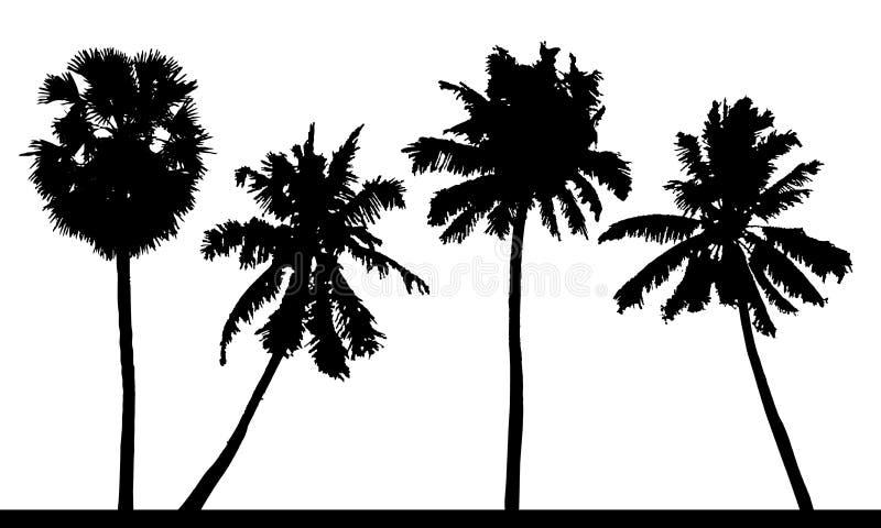 Διανυσματικό σύνολο λεπτομερών τροπικών σκιαγραφιών φοινίκων διανυσματική απεικόνιση