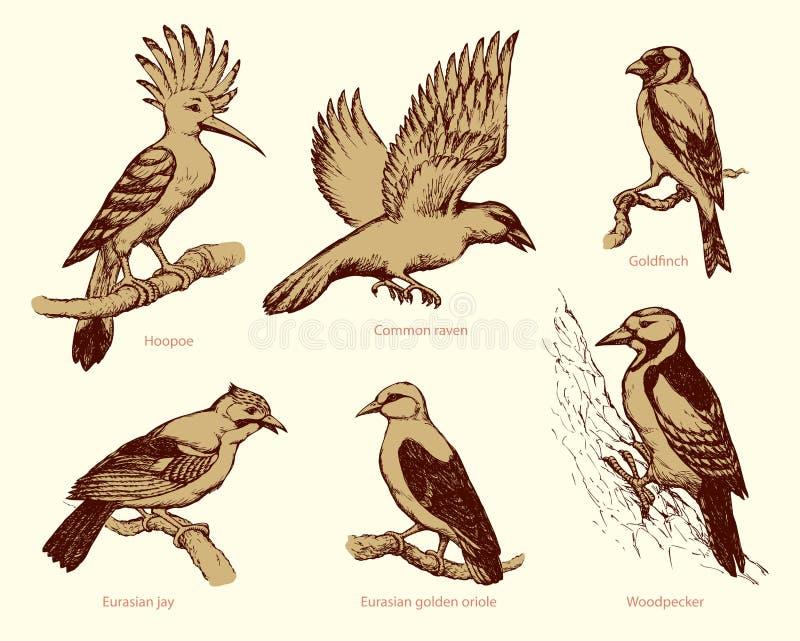 Διανυσματικό σύνολο πουλιών: κόρακας, hoopoe, oriole, δρυοκολάπτης, jay, goldfinch διανυσματική απεικόνιση