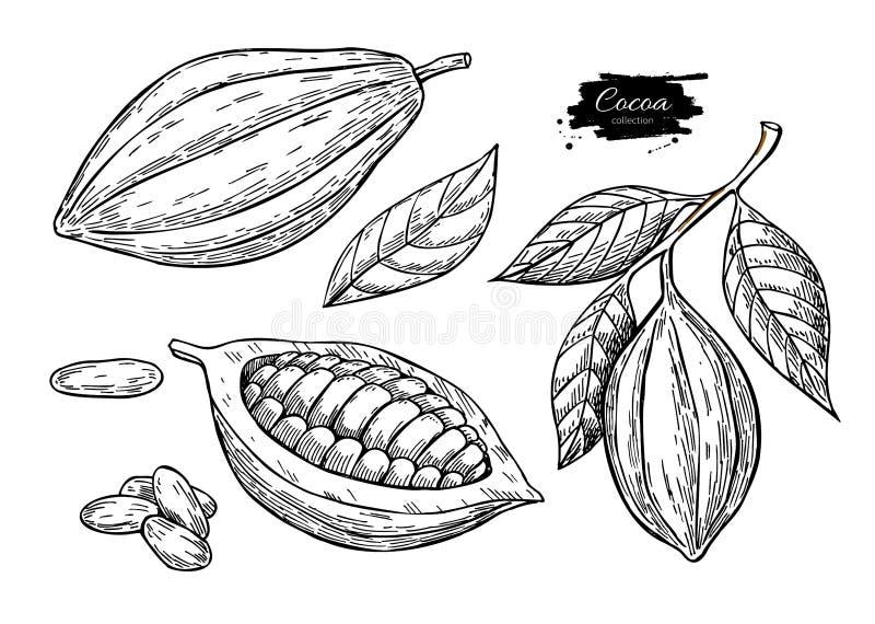 Διανυσματικό σύνολο σχεδίων superfood κακάου Οργανικό υγιές σκίτσο τροφίμων ελεύθερη απεικόνιση δικαιώματος