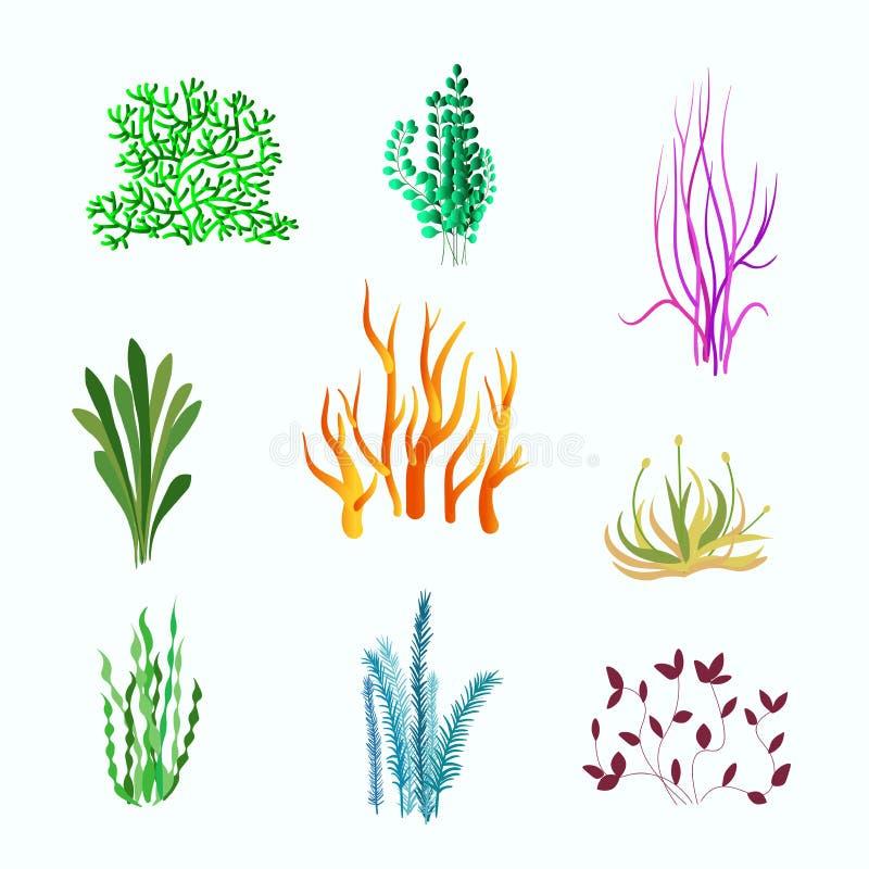 Διανυσματικό σύνολο υποβρύχιων εγκαταστάσεων Υποβρύχιες εγκαταστάσεις, ωκεάνιο και θαλάσσιο φυτό για το ενυδρείο στοκ φωτογραφία