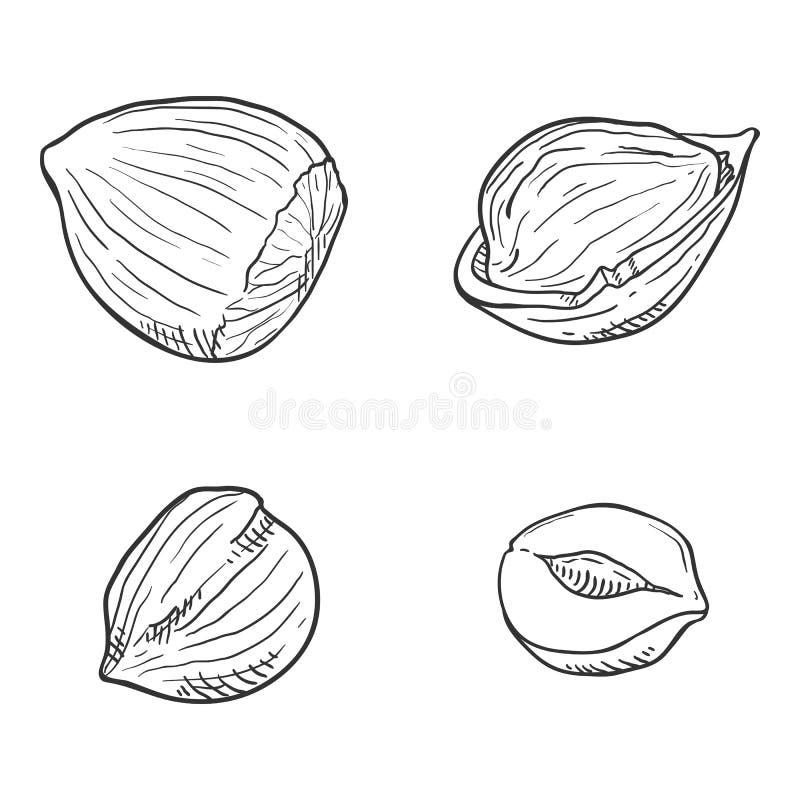 Διανυσματικό σύνολο φουντουκιών σκίτσων απεικόνιση αποθεμάτων