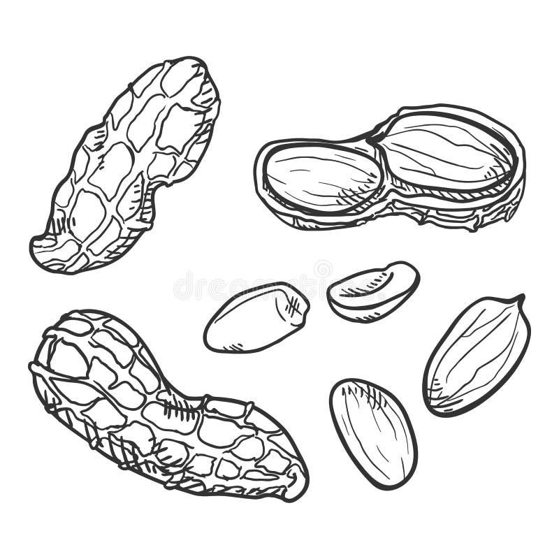 Διανυσματικό σύνολο φυστικιών σκίτσων απεικόνιση αποθεμάτων