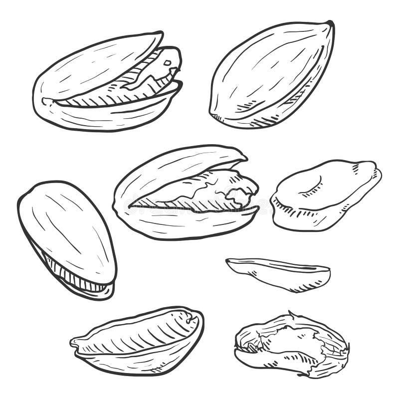 Διανυσματικό σύνολο φυστικιών σκίτσων διανυσματική απεικόνιση