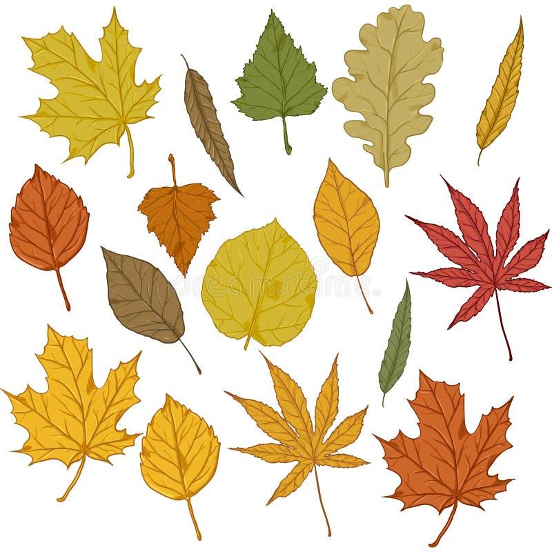 Διανυσματικό σύνολο φύλλων δέντρων φθινοπώρου κινούμενων σχεδίων διανυσματική απεικόνιση