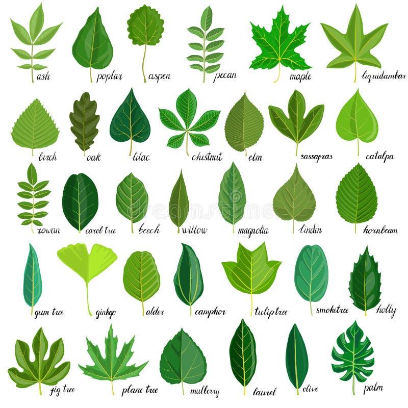 Διανυσματικό σύνολο φύλλων δέντρων διανυσματική απεικόνιση
