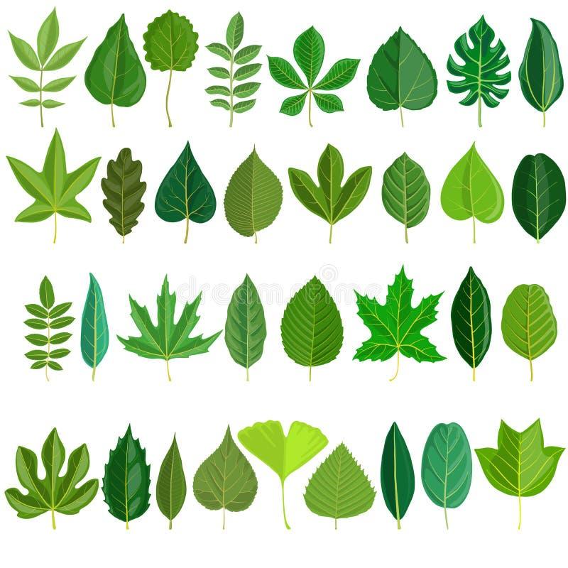 Διανυσματικό σύνολο φύλλων δέντρων απεικόνιση αποθεμάτων
