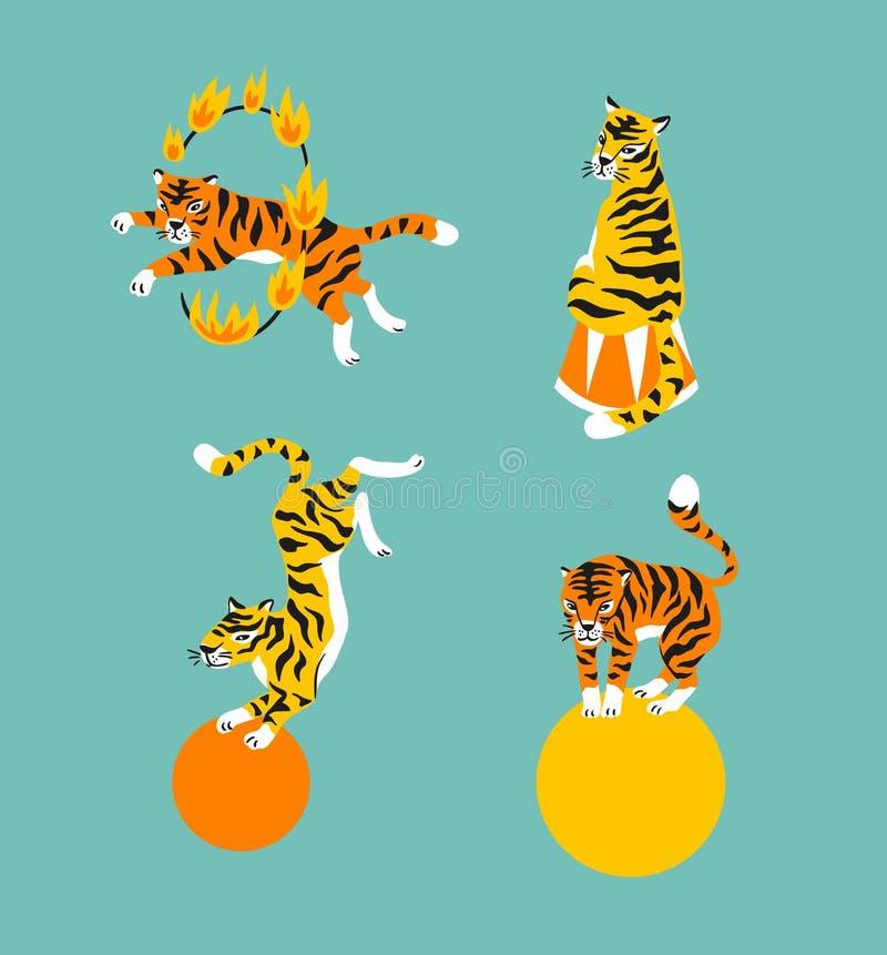 Διανυσματικό σύνολο χαριτωμένων εκπαιδευμένων τιγρών Το ζώο τσίρκων παρουσιάζει Απομονωμένα στοιχεία διανυσματική απεικόνιση