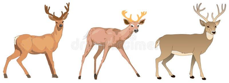 Διανυσματικό σύνολο χαριτωμένων κινούμενων σχεδίων Deers Μανιτάρια, μούρα και φύλλα Διανυσματικά ελάφια μωρών Απεικόνιση Deers διανυσματική απεικόνιση
