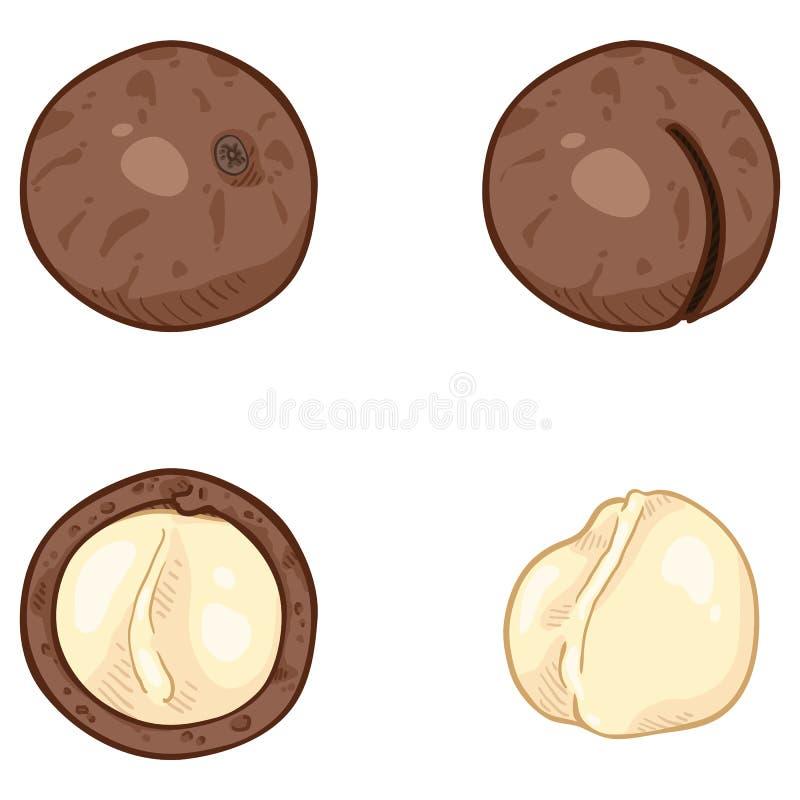 Διανυσματικό σύνολο Macadamia κινούμενων σχεδίων καρυδιών ελεύθερη απεικόνιση δικαιώματος