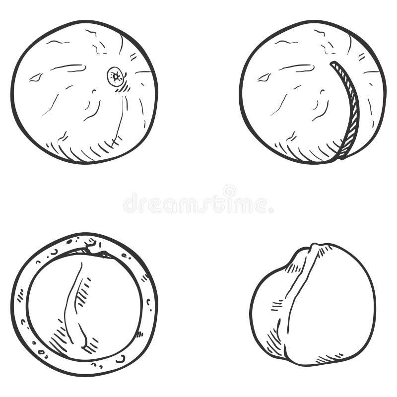 Διανυσματικό σύνολο Macadamia σκίτσων καρυδιών ελεύθερη απεικόνιση δικαιώματος