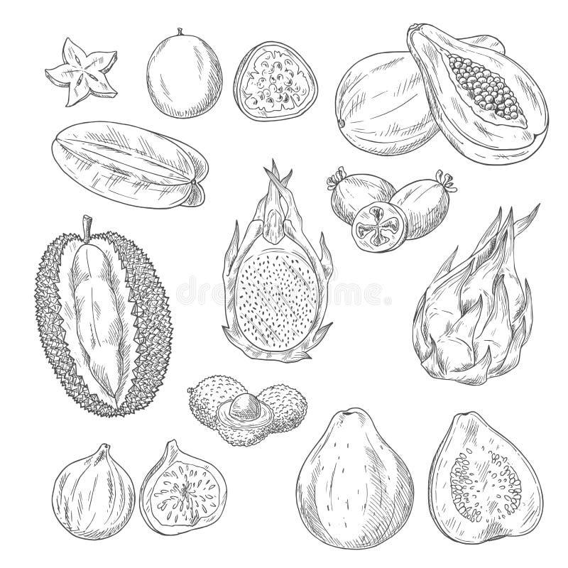 Διανυσματικό σύνολο εικονιδίων σκίτσων εξωτικών τροπικών φρούτων διανυσματική απεικόνιση