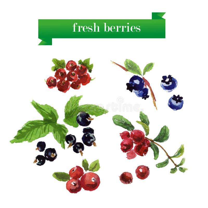 Διανυσματικό σύνολο φρούτων watercolor στο άσπρο υπόβαθρο απεικόνιση αποθεμάτων