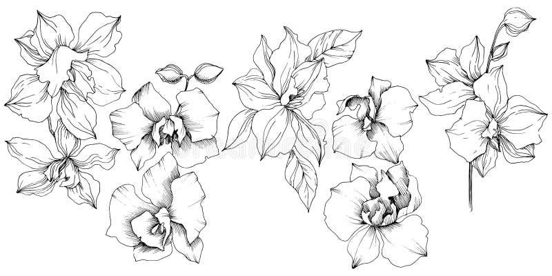 Διανυσματικό τροπικό λουλούδι ορχιδεών Απομονωμένο στοιχείο απεικόνισης απεικόνιση αποθεμάτων
