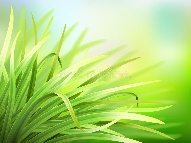 Διανυσματικό υπόβαθρο άνοιξη με τη φρέσκια πράσινη χλόη απεικόνιση αποθεμάτων