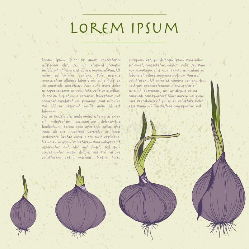 Διανυσματικό υπόβαθρο με το τετραγωνικό πρότυπο κρεμμυδιών για τα κοινωνικά μέσα με τα λαχανικά και το κείμενο απεικόνιση αποθεμάτων