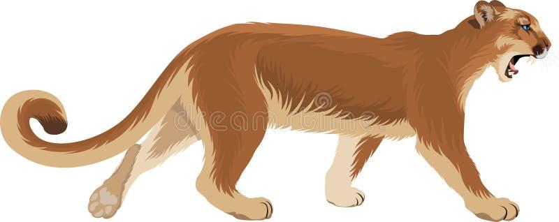 Διανυσματικό concolor Puma puma cougar ή λιοντάρι βουνών ελεύθερη απεικόνιση δικαιώματος