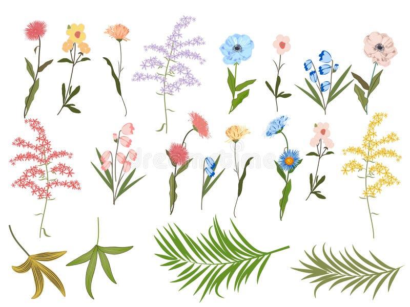 Διανυσματικό floral σύνολο στο άσπρο υπόβαθρο διανυσματική απεικόνιση