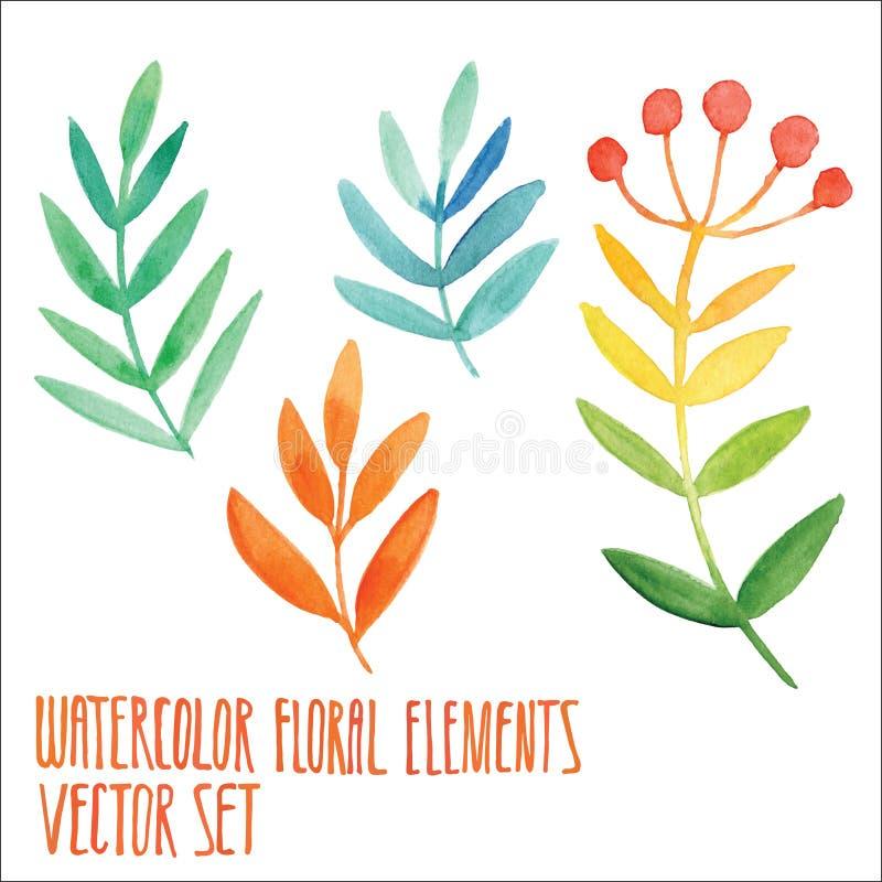 Διανυσματικό floral σύνολο Ζωηρόχρωμη floral συλλογή με τα φύλλα και τα μούρα, που σύρουν το watercolor Σχέδιο άνοιξης ή καλοκαιρ απεικόνιση αποθεμάτων