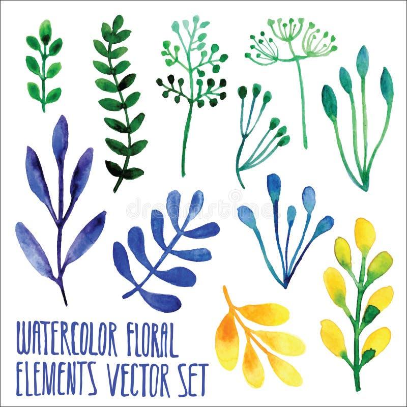 Διανυσματικό floral σύνολο Ζωηρόχρωμη floral συλλογή με τα φύλλα, που σύρουν το watercolor Σχέδιο άνοιξης ή καλοκαιριού για την π διανυσματική απεικόνιση