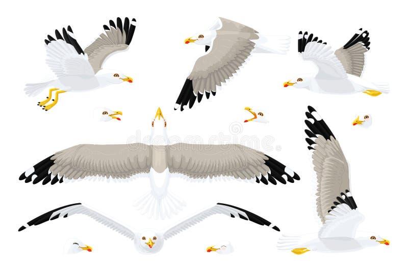 Διανυσματικό seagull σύνολο γλάρων διανυσματική απεικόνιση