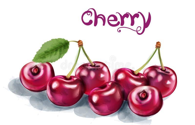 Διανυσματικό watercolor κερασιών Φρέσκα juicy αρωματικά φρούτα που απομονώνονται στα λευκά ελεύθερη απεικόνιση δικαιώματος