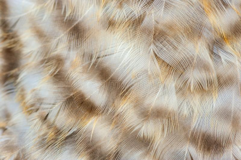 Διαστισμένη μακροεντολή φτερών κοτόπουλου στοκ φωτογραφία με δικαίωμα ελεύθερης χρήσης