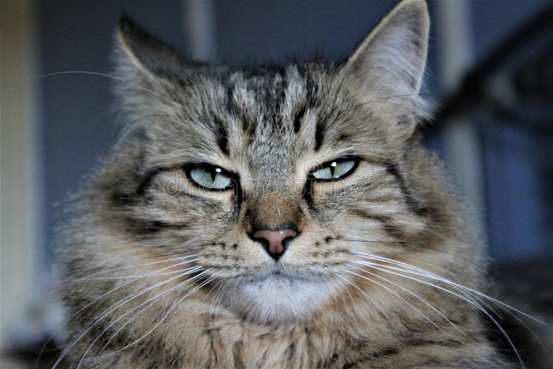Διαταραγμένη γάτα στοκ φωτογραφίες με δικαίωμα ελεύθερης χρήσης