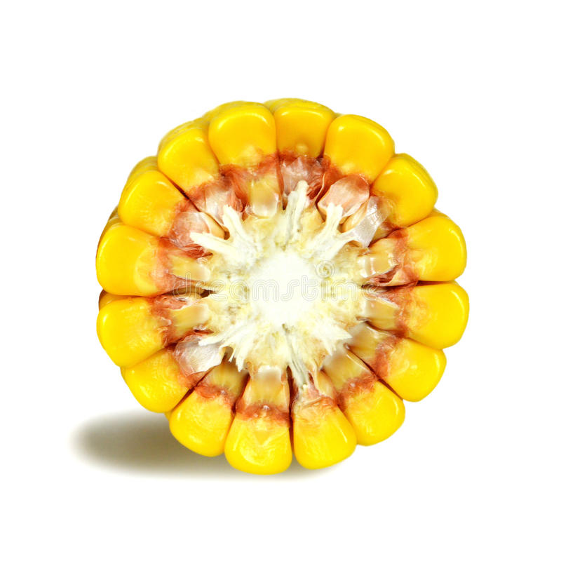Διατομή καλαμποκιού που απομονώνεται στο λευκό στοκ εικόνα