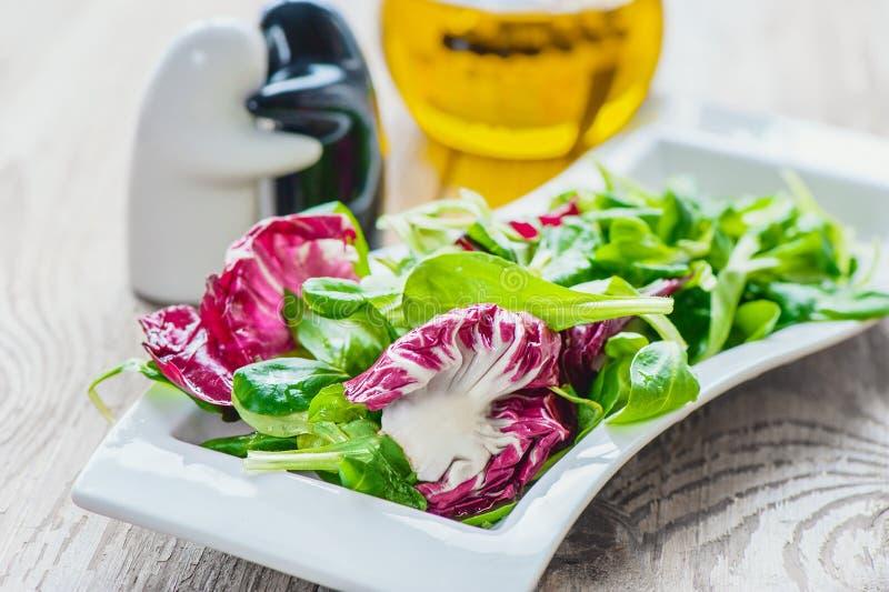 Διατροφή σαλάτας για τη διόρθωση βάρους από τα φύλλα σαλάτας Lollo Rosso, τη σαλάτα κάρδαμου και άλλα πράσινα χορτάρια κατανάλωση στοκ φωτογραφία με δικαίωμα ελεύθερης χρήσης
