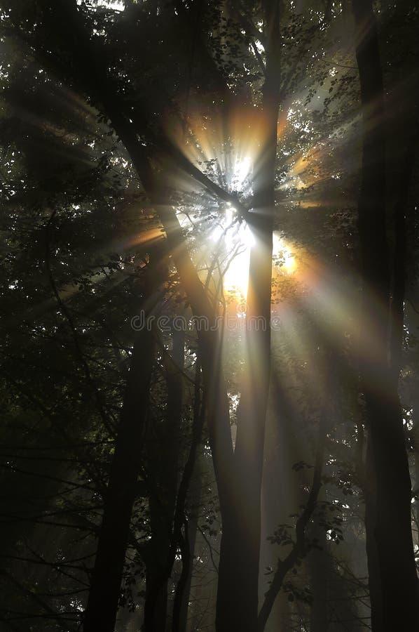 Διαφάνεια του ήλιου στοκ εικόνες