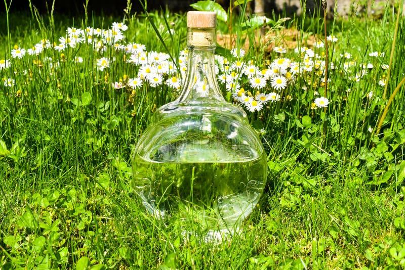 Διαφανές μπουκάλι νερό γυαλιού στην πράσινη χλόη με τις μαργαρίτες και πικραλίδες σε μια ηλιόλουστη ημέρα στοκ φωτογραφίες με δικαίωμα ελεύθερης χρήσης