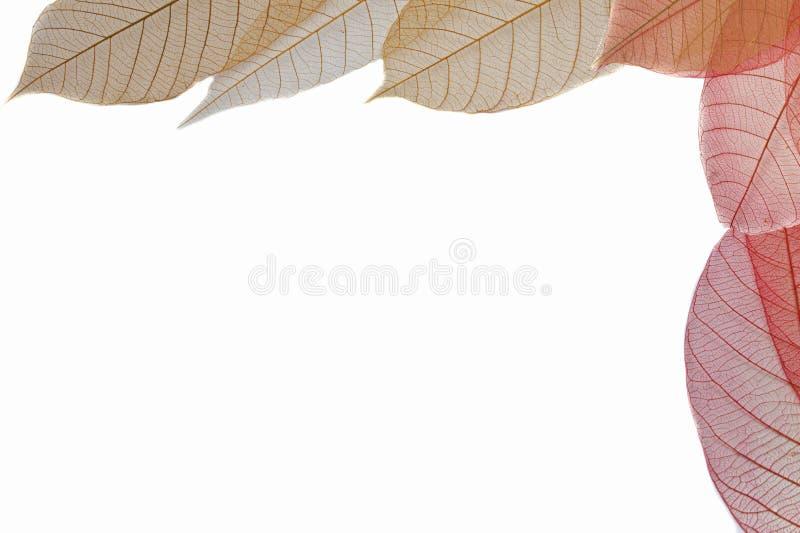 Διαφανές φύλλο στοκ φωτογραφίες