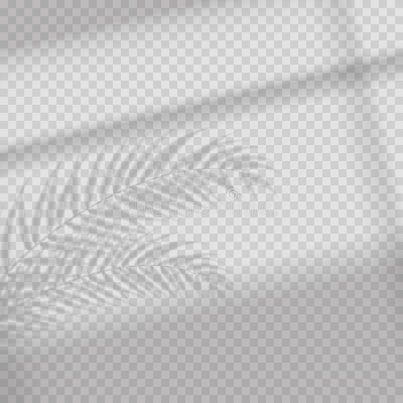 Διαφανής επίδραση επικαλύψεων σκιών Τροπικά φύλλο και παράθυρο τυφλά Photo-realistic απεικόνιση με τα φύλλα φοινικών διανυσματική απεικόνιση