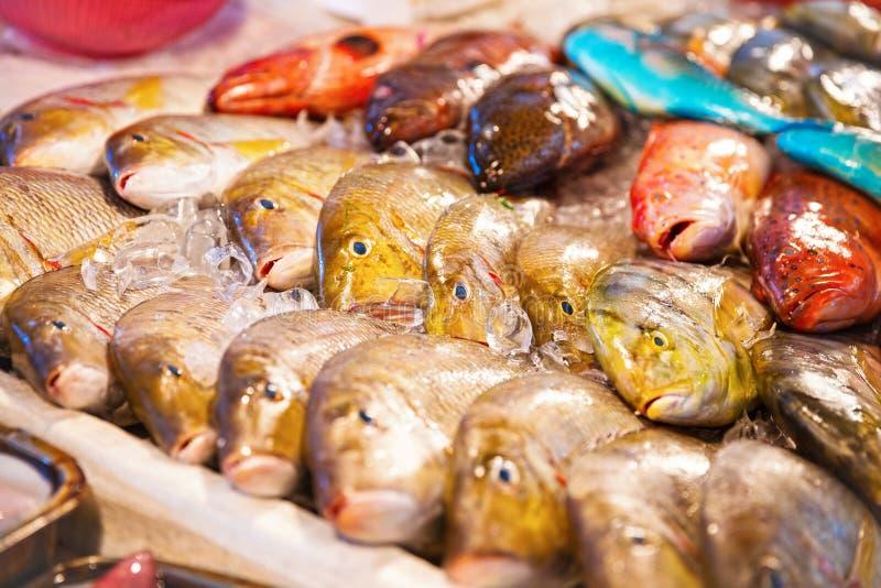 Διαφορετικά είδη ψαριών για την πώληση στοκ φωτογραφίες