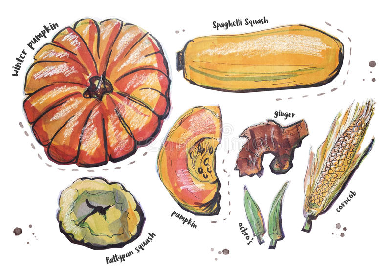 Διαφορετικά τμήματα τροφίμων, που απομονώνονται στο λευκό απεικόνιση αποθεμάτων