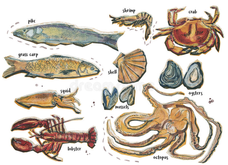 Διαφορετικά τμήματα τροφίμων, που απομονώνονται στο λευκό διανυσματική απεικόνιση