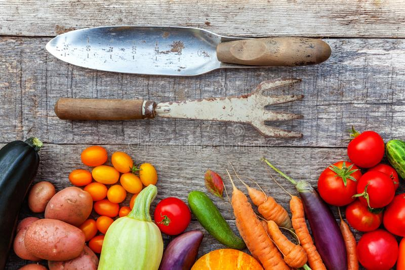 Διαφορετικά φρέσκα οργανικά λαχανικά κατατάξεων και εργαλεία κηπουρικής στο ξύλινο υπόβαθρο ύφους χωρών Τοπικά προϊόντα κήπων καθ στοκ εικόνες