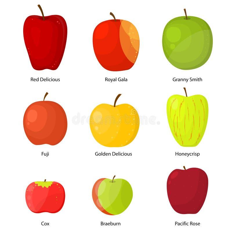 Διαφορετικές ποικιλίες μήλων με ένα σύνολο περιγραφής διάνυσμα διανυσματική απεικόνιση