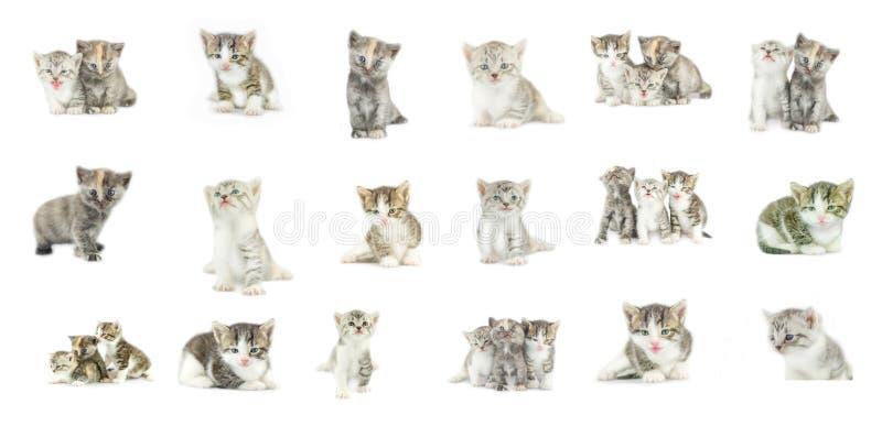 Διαφορετική συλλογή γατακιών που απομονώνεται στο άσπρο υπόβαθρο στοκ εικόνες με δικαίωμα ελεύθερης χρήσης